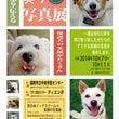 犬も笑う写真展開催!…