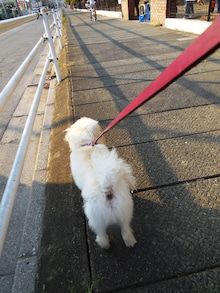 お散歩中~