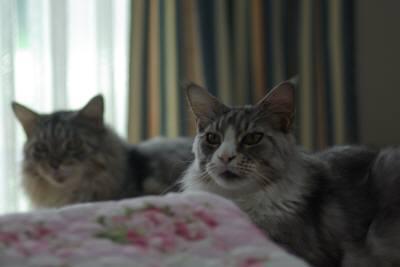 cat175