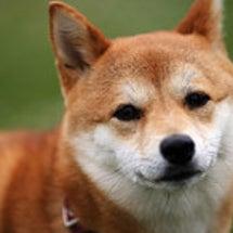 ビックリ!〇〇犬