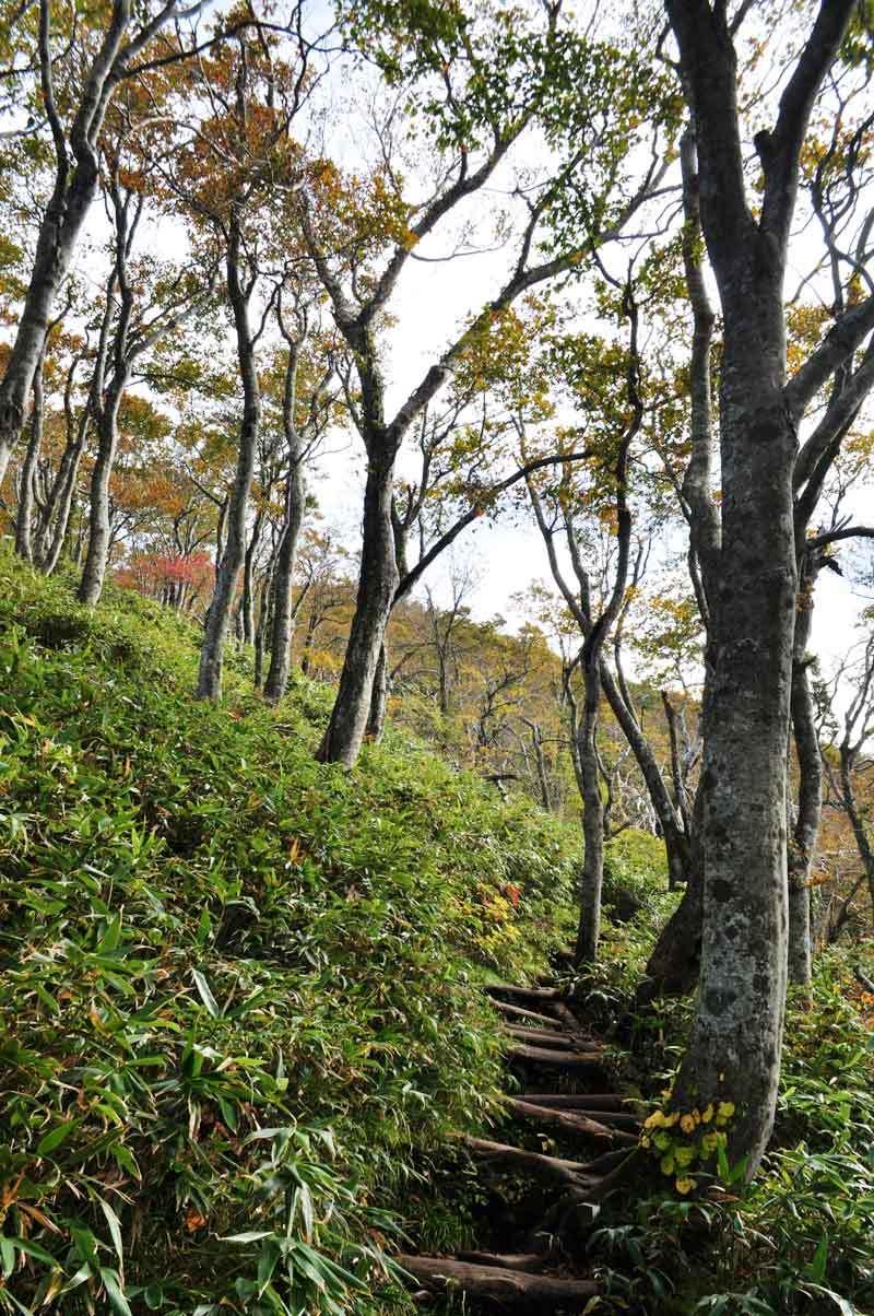 白神山地二ツ森の登山道