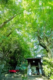 酔芙蓉の寺「大乗寺」
