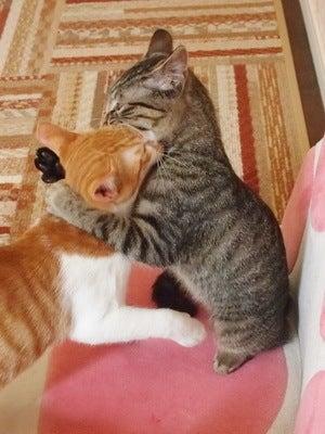 本日より「仔猫祭り」