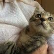子猫一匹の里親様募集…