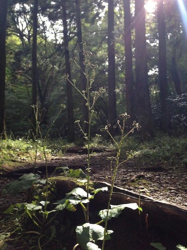 光り差す植物