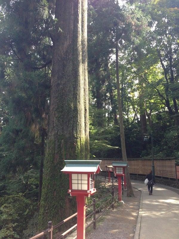 杉巨木並木道