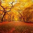 秋の土用2016