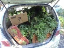 野菜出荷14.10.18.jpg