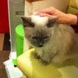 猫カフェに初めて行っ…