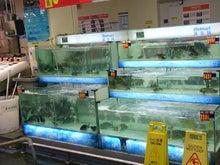 魚売り場の水槽