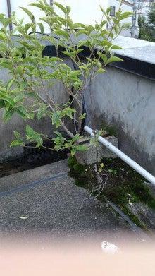 141103_雑木