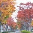 小さい秋が