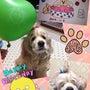 ミルキー7歳の誕生日