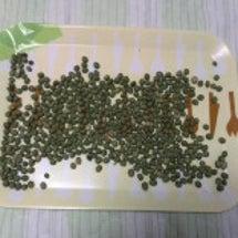 行田在来青大豆収穫