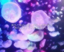 流星クラゲ
