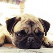 犬のヘン顔