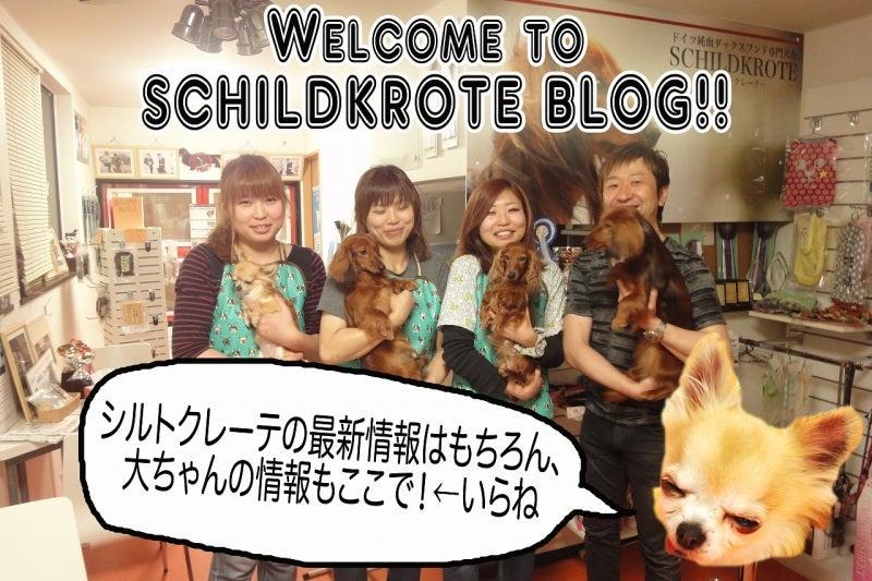 $schildkrote blog