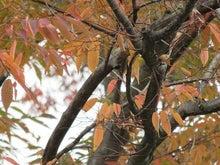 鳥のいる枝