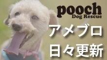 Pooch Dog Rescue 公式ブログ