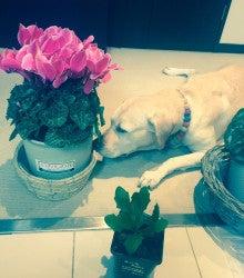 アリスと花