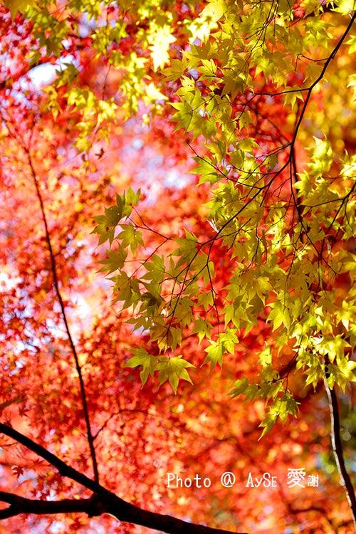 京都 高雄 紅葉