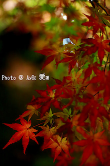 京都 大覚寺