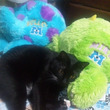 我が家の癒し系猫が!
