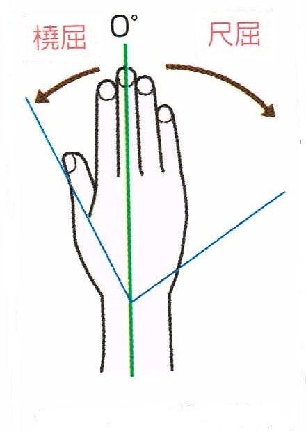手首の橈屈・尺屈
