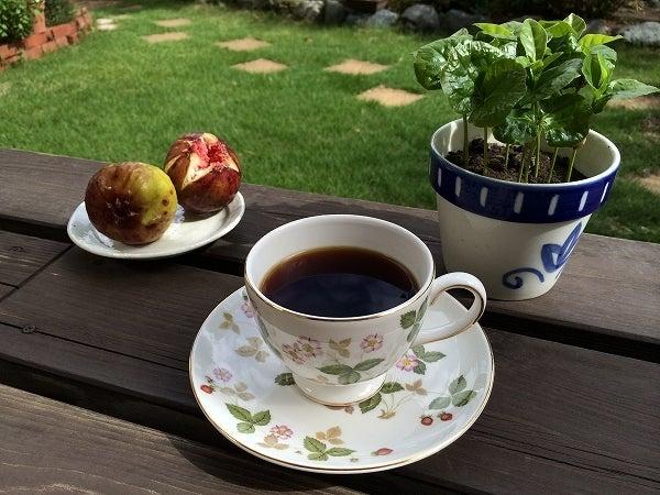 秋のコーヒーの木1