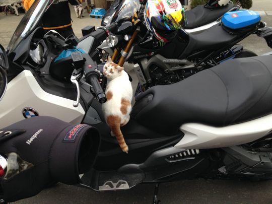 番外編:ネコに気に入られるおんさんのC60