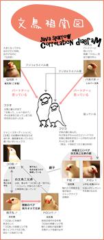【7羽の手乗り文鳥】フジオとフジコ『相関図』を作りました