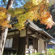 鎌倉・明月院、東慶寺…