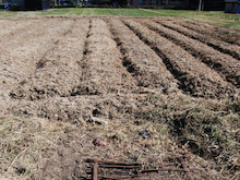 約10アールの畑。 何を植えようか