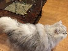 火鉢with猫