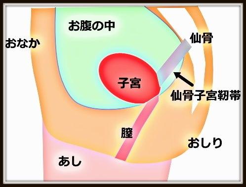 整体的妊活への考え方 骨盤のゆがみによる仙骨子宮靭帯