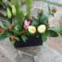 お庭に正月花を