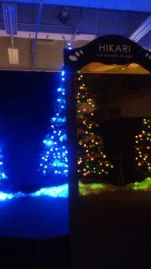 カイコクリスマスツリー02