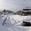 十年ぶりの雪景色