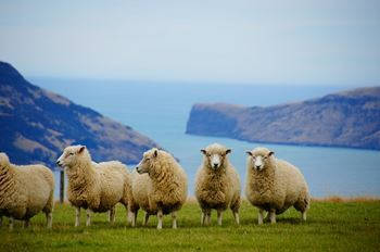 ニュージーランド 移住 仕事 海外移住