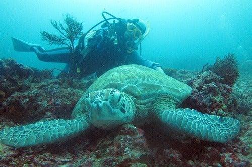 「カパライ ダイビング」の画像検索結果