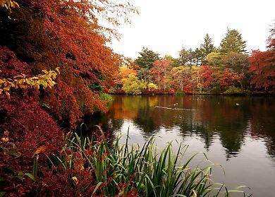 2014紅葉の軽井沢雲場池-2