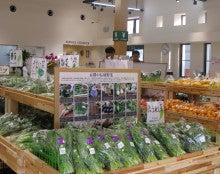 じねんと市場の野菜