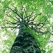 京都で庭木を伐採する…