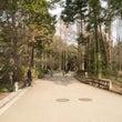 京都マラソン植物園コ…