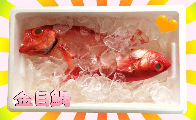 金目鯛① U゚ェ^U☆