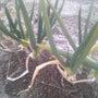 植物の感受性