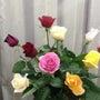 こんなにきれいな薔薇…