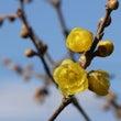 ●立春の今、乾燥によ…