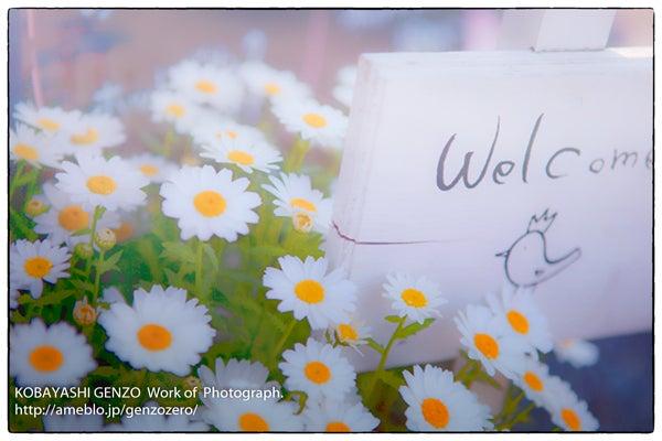 Flower_IMG_1