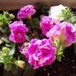 ☆厳冬に咲く春夏の花…